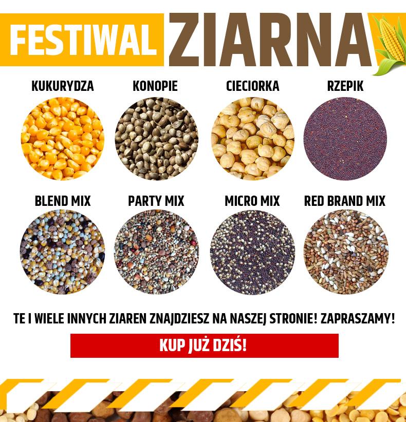 790-festiwal-24-06-2016